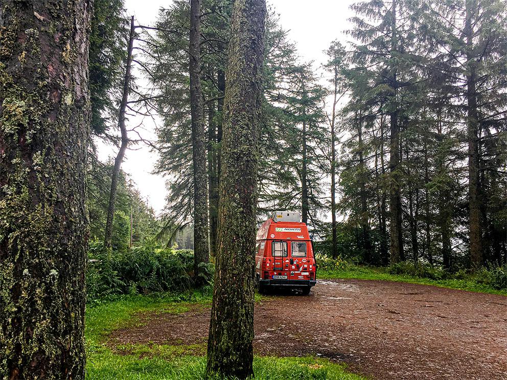 Mitten im Wald – urige und mystische Stimmung am Loch Lomond.